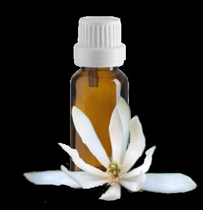 abs magnolia